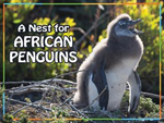 A Nest for African Penguins